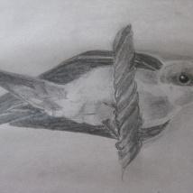 Swallow. Suzanne Skaar. Pencil, Newsprint. 2014.